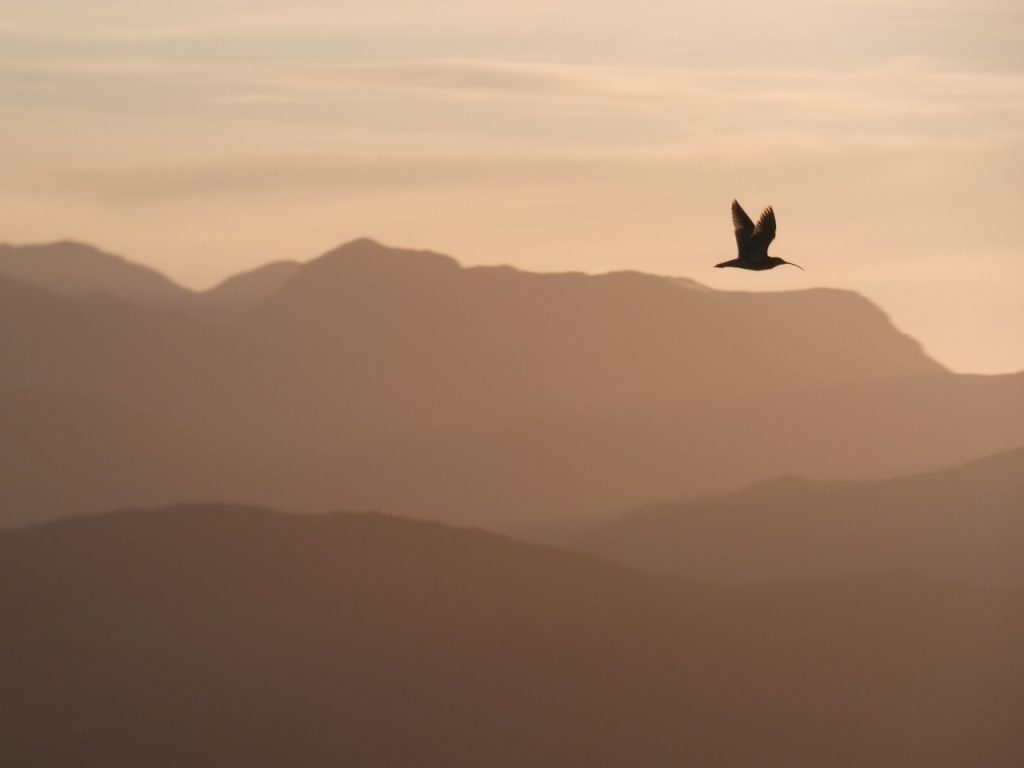Bird poem - Ebbing the Breadth