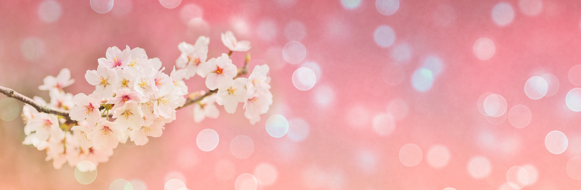 Spring Poem - Cherry Blossoms